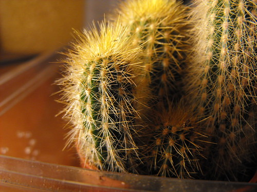 cacti ID's 3279126641_09650d8dce