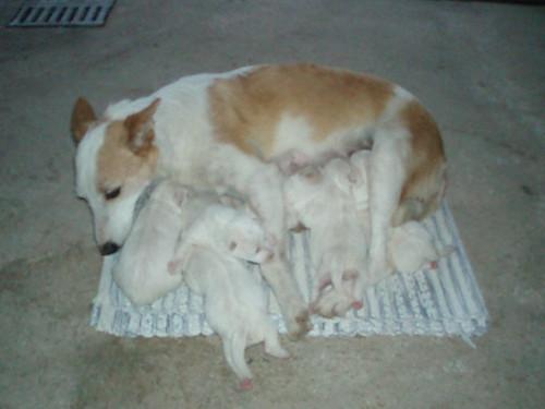 cachorros 3589351373_954672742b