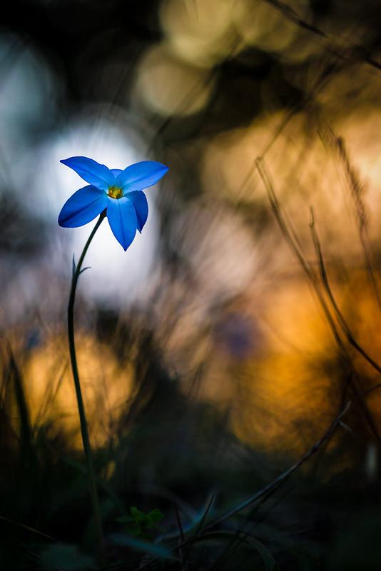 Flower for my love 13015926673_e435c3ae18_c