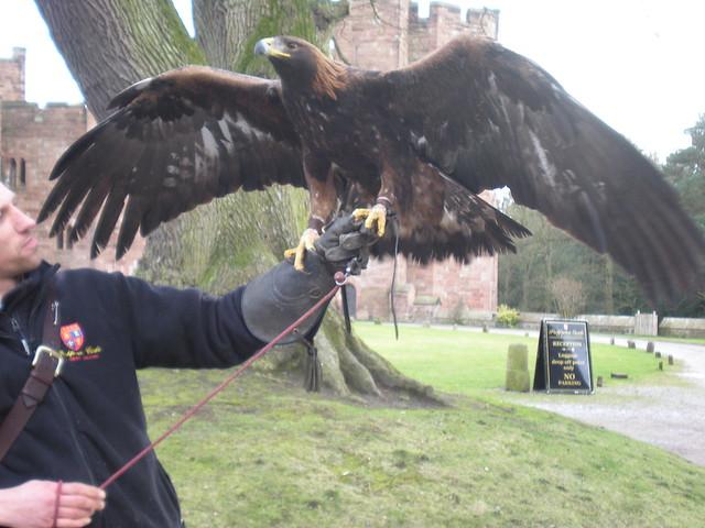 Comparação do tamanho de águias  com relação ao homem. 3304244500_000c6ca563_z