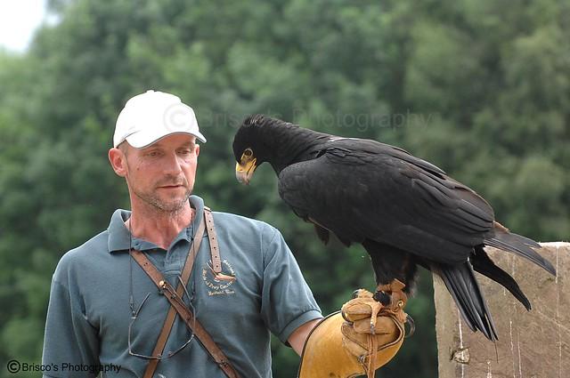 Comparação do tamanho de águias  com relação ao homem. 3739675959_8b25d38c91_z