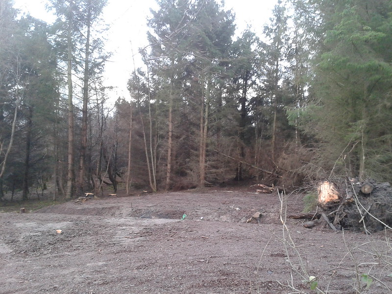 Clearing the woods next to Mauricewood road 12434873524_8e62b7771c_c