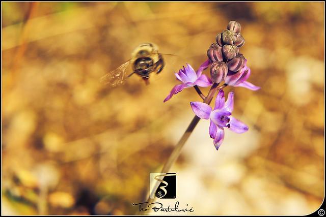 Bee leaves the flower