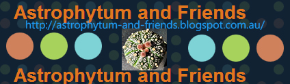 http://astrophytum-and-friends.blogspot.com/