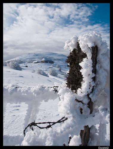 Vos plus belles photos du mois de février 2010 4344343286_767cb512ff
