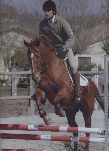 Cheval de Sport Pur sang a vendre 4679041701_49dba3692d