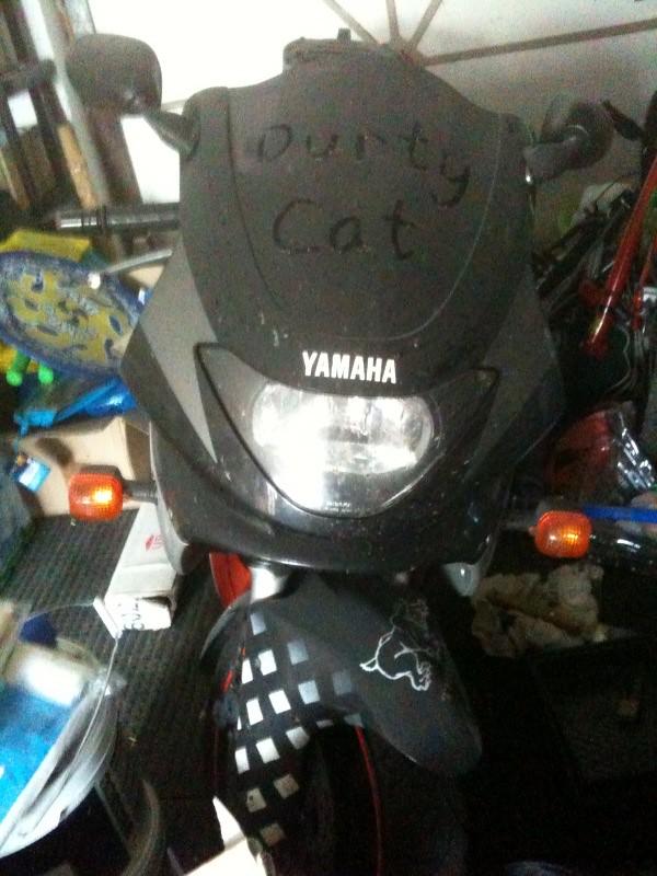 Perfect Cat needs help....... 4708843062_6f2de86f82_b