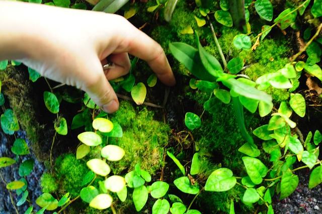 L'orchidarium de Damas - Page 11 5414081426_35d8b15e97_z