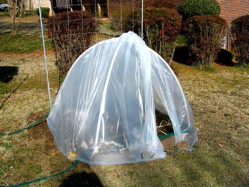 Unfrozen in Atlanta 5442326559_9ac4a9d5b3