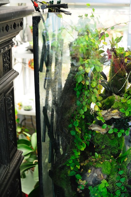 L'orchidarium de Damas - Page 11 5414075478_f4a77611f2_z
