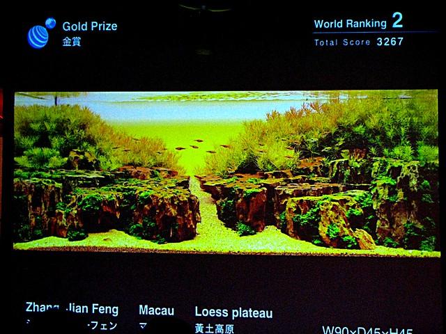 IAPLC 2010 - Divulgadas fotos dos primeiros colocados 5047421650_866fc3d4ff_z