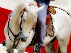 Courses, abrivados, encierros, roussatailles... site fotos 4895010522_85faef21d1_m