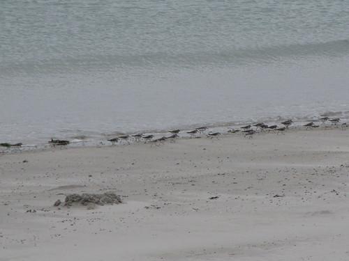 Fée face à la mer SUITE ET FIN + les photos.... 4877043350_8007eb0ea3