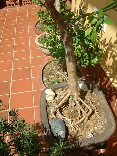 Protuding Roots 5633656607_95f4df7799