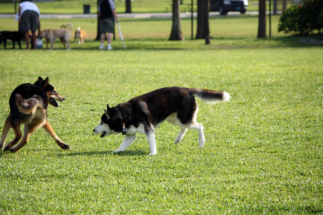 Florida Huskies and the NEW addition 9/5/13 - Page 2 5578391700_2cdfecddb6_z