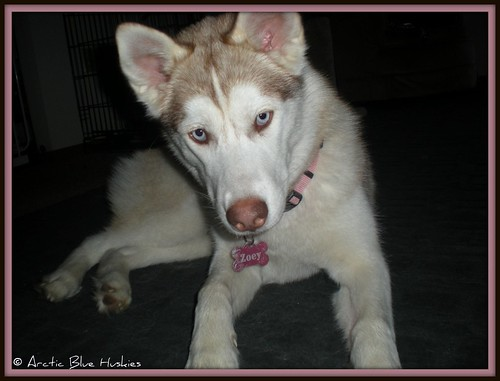 52 weeks for dogs; Zoey!  !!11.52!! - Page 2 5556883421_6d74c16923