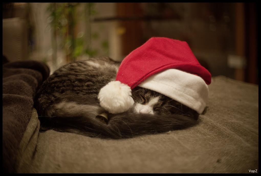 Dimanche 12 Décembre - Portrait 5254413847_fbc4c7183a_o