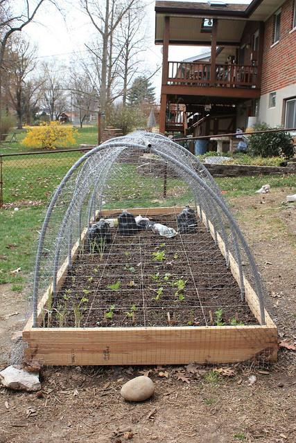 April in the Midwest Garden 5579618917_da2e141383_z