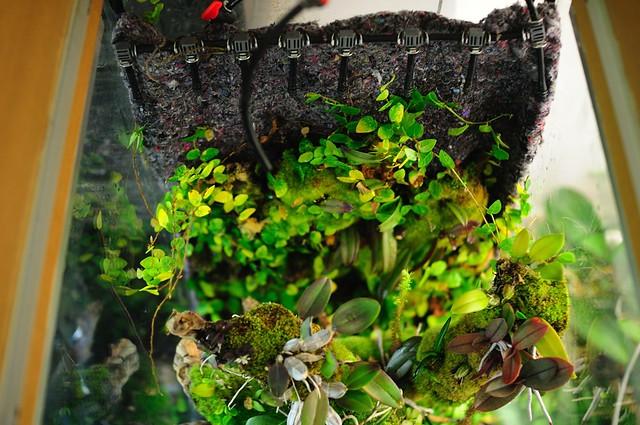 L'orchidarium de Damas - Page 11 5413472357_0f01e170e1_z