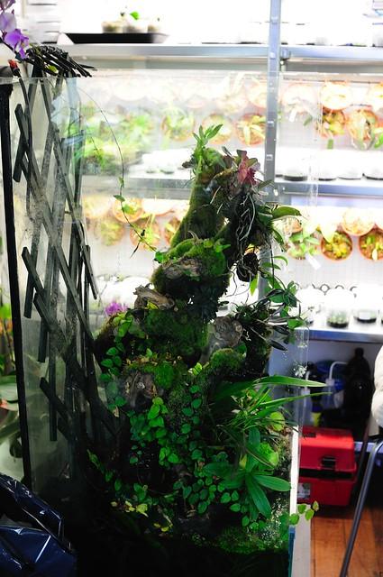 L'orchidarium de Damas - Page 11 5414076020_0ef6748774_z