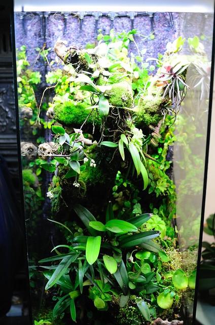 L'orchidarium de Damas - Page 11 5414084022_041a8dcc9f_z