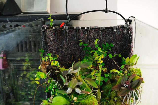 L'orchidarium de Damas - Page 11 5413471297_e75d00a9ee_z