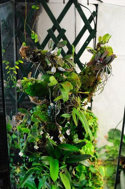 L'orchidarium de Damas - Page 11 5414075624_e01fc1b98e_z