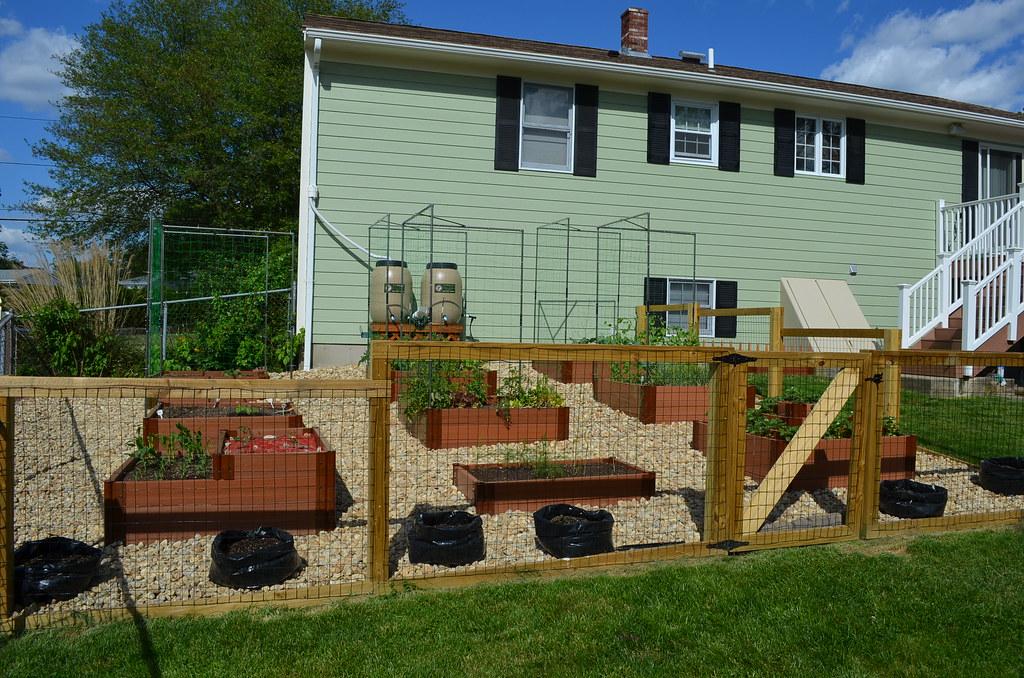 New garden from Dartmouth,MA (pics) 5794470635_14a3600b1a_b