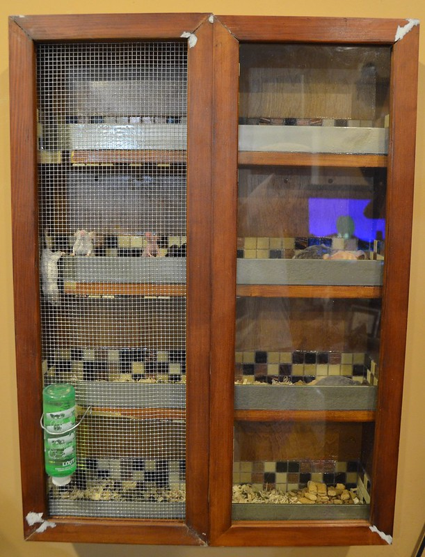 Converted Cabinet Mouse Cage! 7100290135_e14a06fe69_c