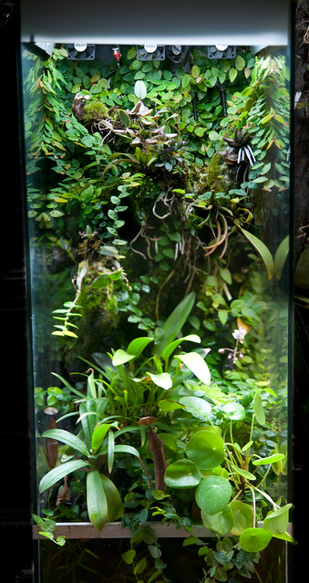 L'orchidarium de Damas - Page 11 7187225021_15fe59c0f9_z