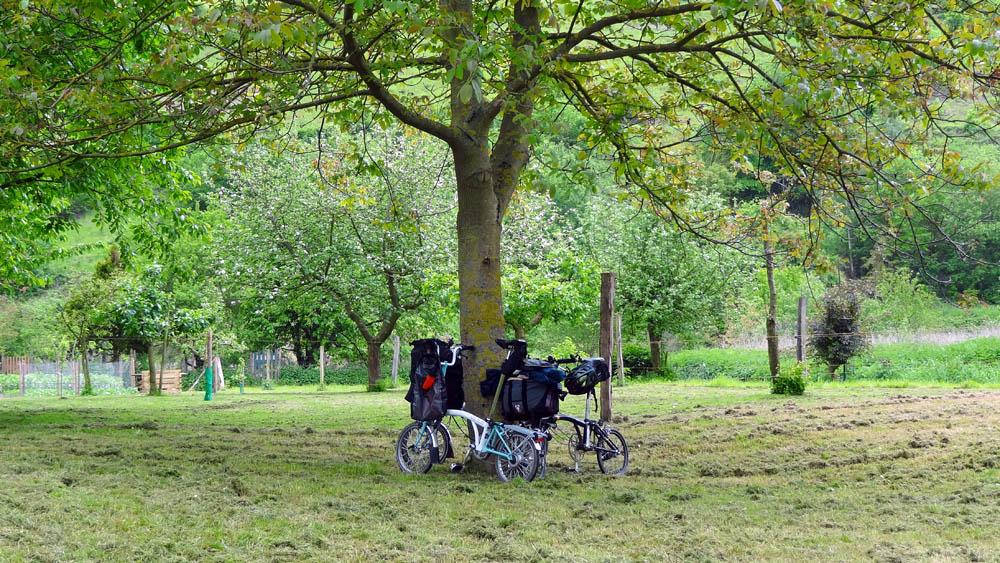 Balade de l'Arbre de mai : Eifel et Moselle [2012] saison 7 •Bƒ   - Page 3 7244686136_5ae44792ab_o