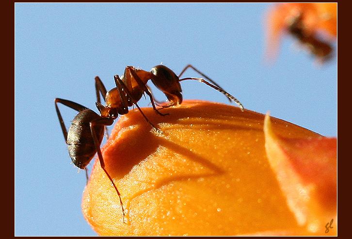 Dans le jardin des Minuscules... 9351784796_af94eee2ec_o
