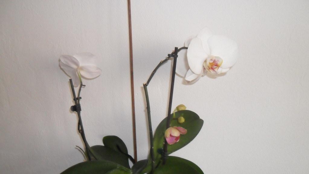 Orhideele lui Victor - Pagina 3 7063734119_fa21a2337f_b