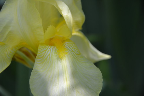 n°9 - Iris id.