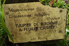 Liriodendron tulipifera - tulipier de Virginie - Page 2 10832890665_f20c81ab9f_m
