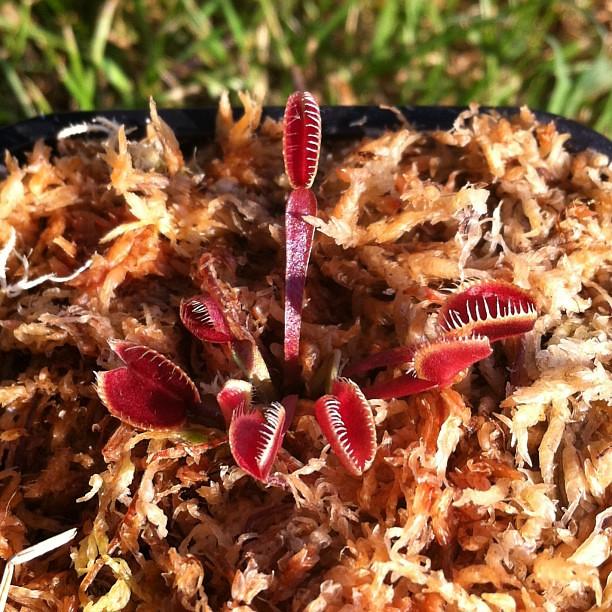 My seedling , a voir si cela reste stable sur le temps. 9327221989_1edbefca7b_z