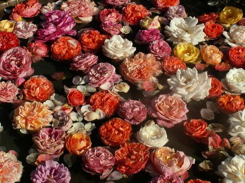 Nuage de roses