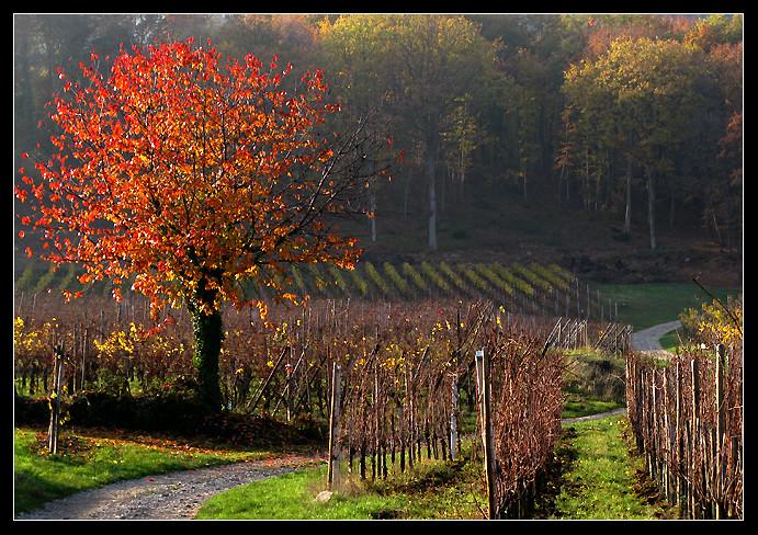 l'automne express - Page 5 6336696863_214c369e90_b