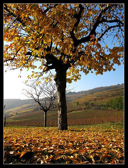 l'automne express - Page 5 6337451628_0ced8a7d1d_z
