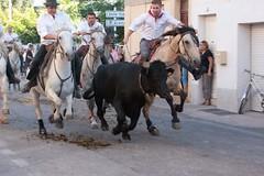 Courses, abrivados, encierros, roussatailles... site fotos 6032806601_de583f652d_m