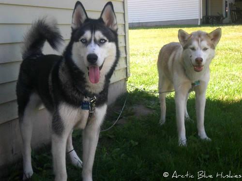 Embry, Zoey & Ares's Scrapbook! Updated *12.10* - Page 2 6063242114_dbdfd6239d