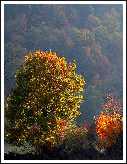 l'automne express - Page 4 6305564424_2d351c2021_z