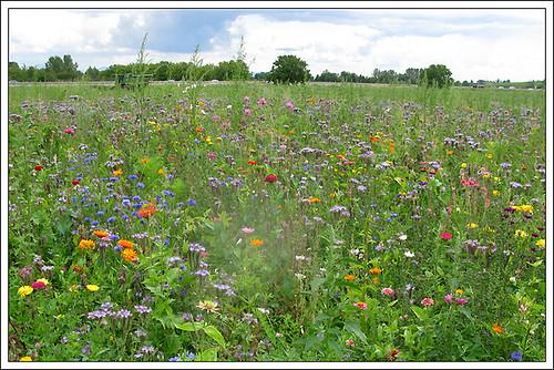 Photos de jardins, parcs, forêts... dans le monde - Page 2 5987587597_3ef67085f0