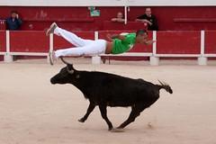 Courses, abrivados, encierros, roussatailles... site fotos 6186469630_cb126803bd_m