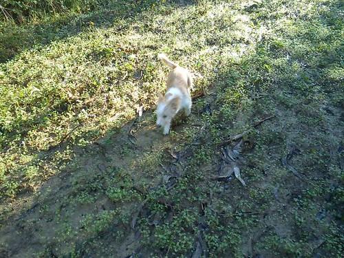 Os meus Caninos!! 6466688625_743dfd0e6b