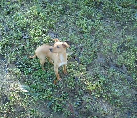 Os meus Caninos!! 6466688515_cb9f1c246b