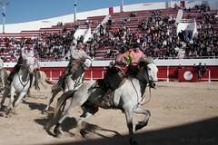 Courses, abrivados, encierros, roussatailles... site fotos 6984692920_8498136634_m