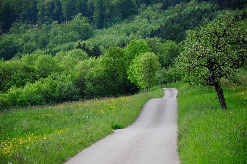Balade de l'Arbre de mai : Eifel et Moselle [2012] saison 7 •Bƒ   - Page 3 7247756128_0de84fce49_c