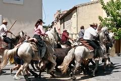 Courses, abrivados, encierros, roussatailles... site fotos 7663373020_7b1962641d_m