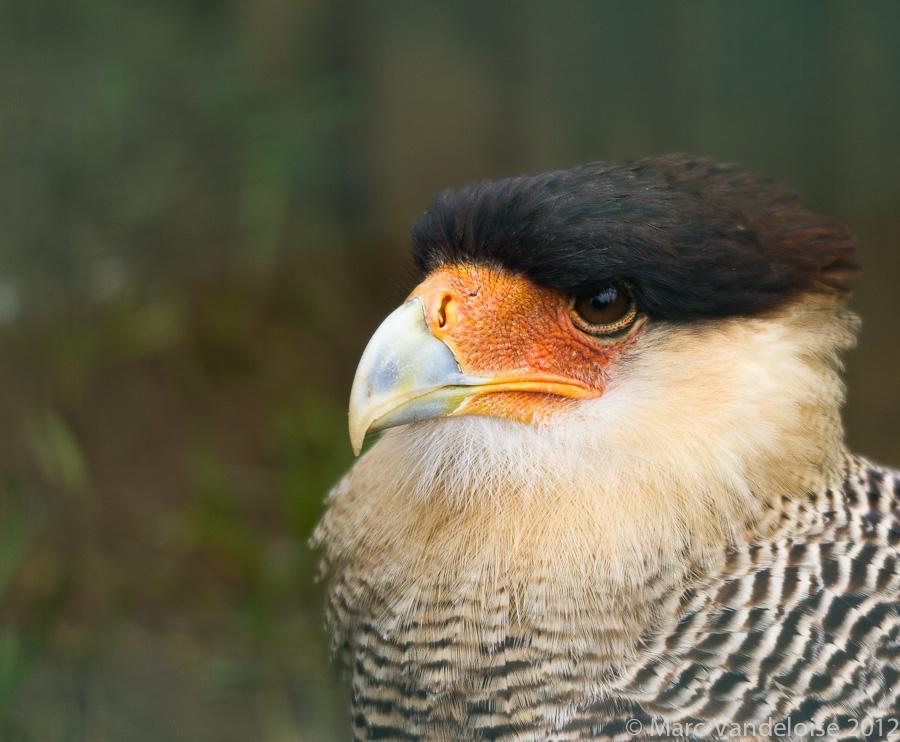Sortie au Zoo d'Olmen (à côté de Hasselt) le samedi 14 juillet : Les photos 7573002076_8927a449e0_o